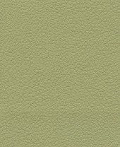 Brisa 33-4510 - Celery #1